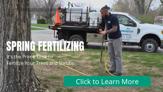 """IT""""S TIME FOR SPRING FERTILIZING from ArborTech"""